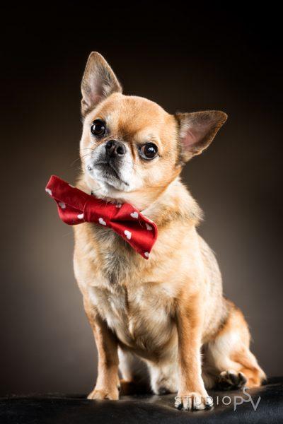 Lemmikkiä kuvataan kotonakin paljon, mutta ammattivalokuvaajan ottama kuva on ihan eri luokkaa. Kuka tahansa koiran ja kissan omistaja ilahtuu lahjakortista lemmikkikuvaukseen. Kuva Noora Slotte, Studio P.S.V.