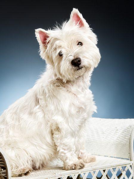 Onko koirasi perheenjäsen? Paras kaverisi? Lemmikkisi ansaitsee kunnon kuvat. Valokuvaaja Noora Slotte, Studio P.S.V.
