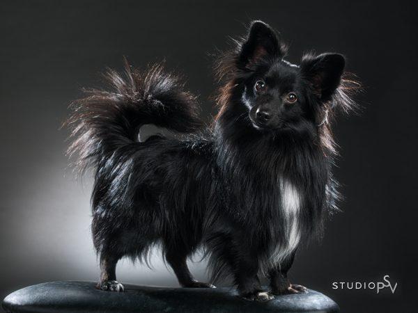 Ikuista paras kaverisi taitavalla koirakuvauksella. Valokuvaaja Noora Slotte, Studio P.S.V.