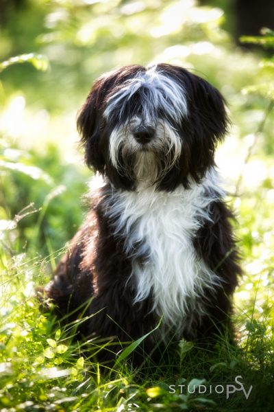 Koirien oma puistokuvauspäivä on 29.8. Kuvaukset teemme Pyykösjärven ympäristössä. Kuvauksen hinta on vain 45 e. Varaa aika omalle sesselle heti, sillä vain kuvausaikoja on vain muutama.